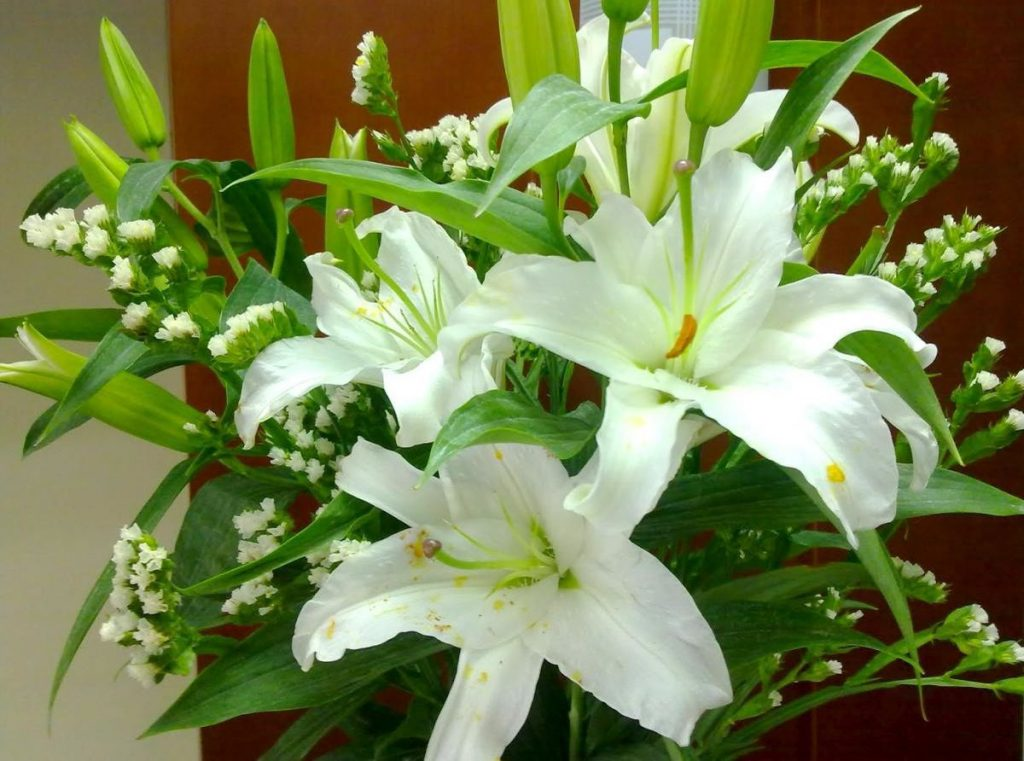 Nước chanh tươi và nước đường giúp hoa huệ nở đẹp và lâu hơn.