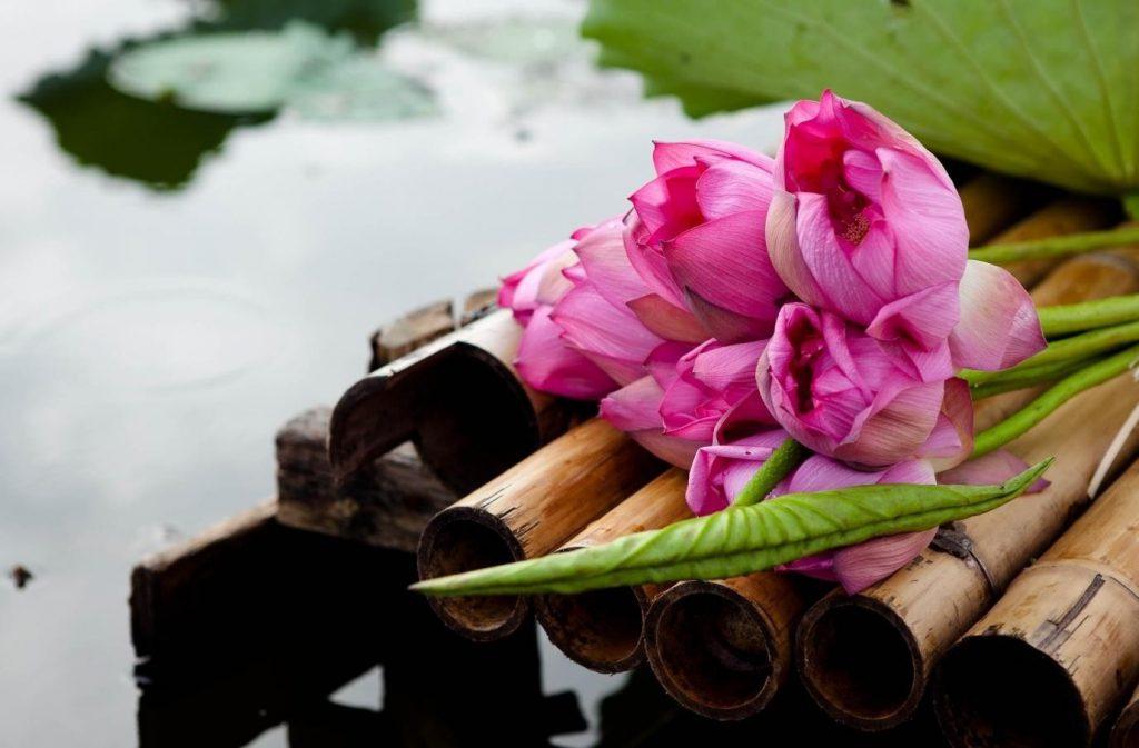 Hoa sen giúp các nữ sinh trông thật duyên dáng, đắm thắm nét đẹp truyền thống.