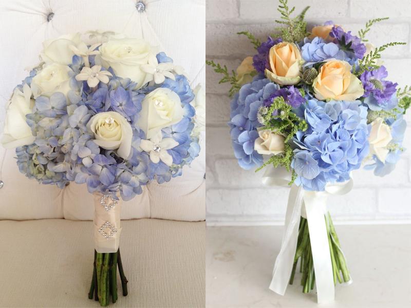 Hoa cẩm tú cầu vô cùng đáng yêu