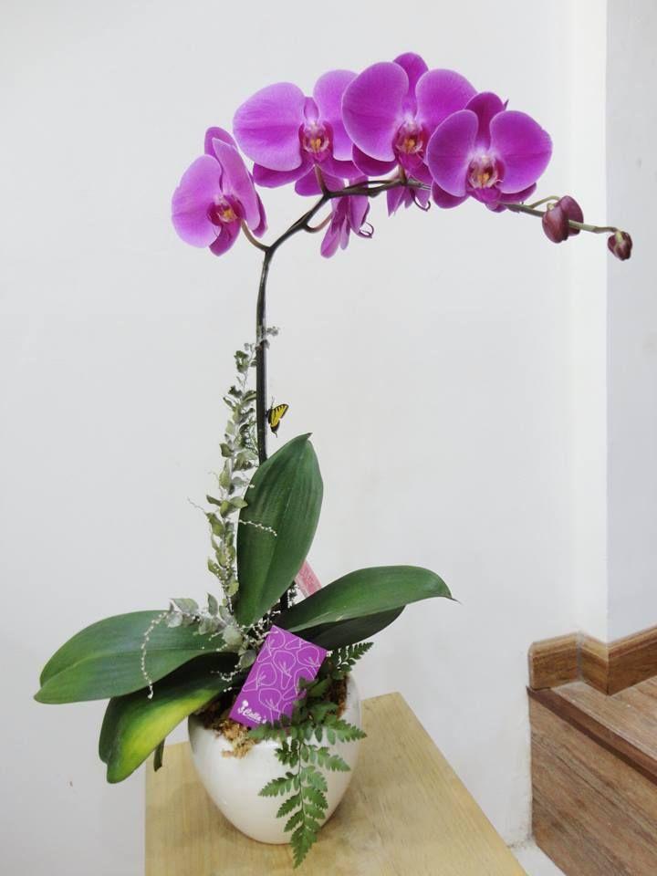 Lan Hồ Điệp tím là loài hoa được rất nhiều người yêu thích và săn lùng