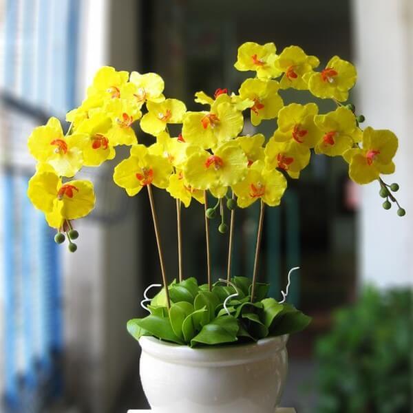Những bông hoa lan hồ điệp thường được trưng bày trong các dịp lễ Tết