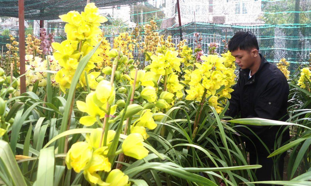 Địa lan là loài hoa đẹp của Việt Nam