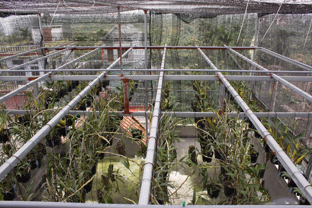 Hoa địa lan khi được đáp ứng các điều kiện sinh học thì sẽ phát triển tốt và tươi lâu hơn