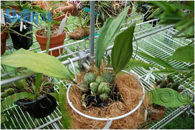 Xơ dừa cung cấp nhiều dưỡng chất cần thiết cho cây hoa lan phát triển tốt hơn